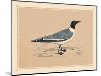 'Gull', (Laridae), c1850, (1856)-Unknown-Mounted Giclee Print
