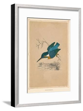 'Kingfisher', (Alcedines), c1850, (1856)-Unknown-Framed Giclee Print