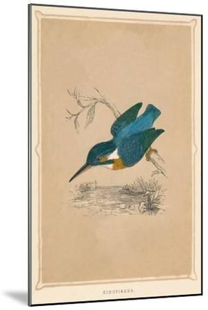 'Kingfisher', (Alcedines), c1850, (1856)-Unknown-Mounted Giclee Print