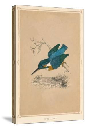 'Kingfisher', (Alcedines), c1850, (1856)-Unknown-Stretched Canvas Print