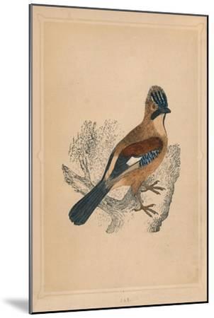'Jay', (Garrulus glandarius), c1850, (1856)-Unknown-Mounted Giclee Print