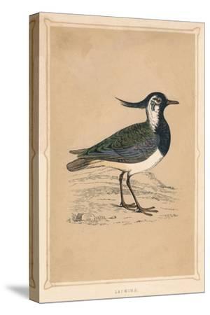 'Lapwing', (Vanellus vanellus), c1850, (1856)-Unknown-Stretched Canvas Print