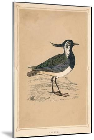'Lapwing', (Vanellus vanellus), c1850, (1856)-Unknown-Mounted Giclee Print