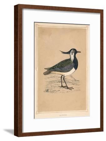'Lapwing', (Vanellus vanellus), c1850, (1856)-Unknown-Framed Giclee Print