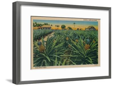 'Pine-Apple Field - Habana, Campo De Pinas', c1910-Unknown-Framed Giclee Print