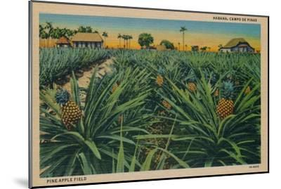 'Pine-Apple Field - Habana, Campo De Pinas', c1910-Unknown-Mounted Giclee Print