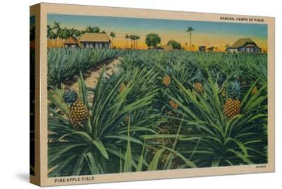 'Pine-Apple Field - Habana, Campo De Pinas', c1910-Unknown-Stretched Canvas Print