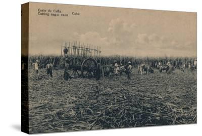 'Corte de Cana - Cutting sugar cane - Cuba', c1910-Unknown-Stretched Canvas Print