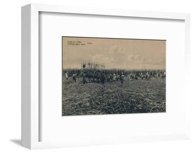 'Corte de Cana - Cutting sugar cane - Cuba', c1910-Unknown-Framed Photographic Print