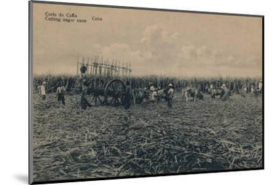 'Corte de Cana - Cutting sugar cane - Cuba', c1910-Unknown-Mounted Photographic Print
