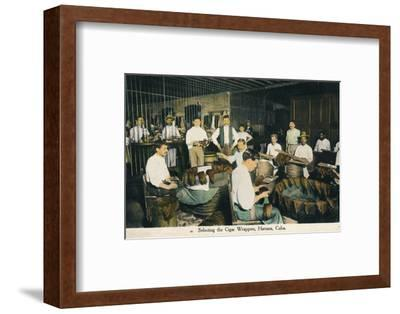'Selecting the Cigar Wrappers, Havana, Cuba', c1910-Unknown-Framed Photographic Print