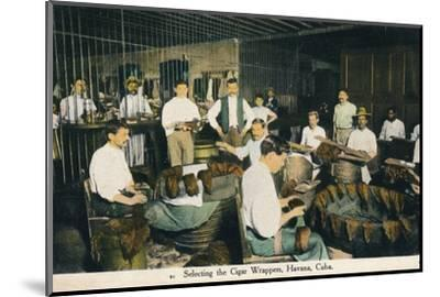 'Selecting the Cigar Wrappers, Havana, Cuba', c1910-Unknown-Mounted Photographic Print
