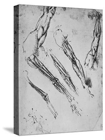 'Six Studies of an Arm Showing in Three Cases the Bones', c1480 (1945)-Leonardo da Vinci-Stretched Canvas Print