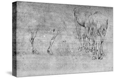 'Studies of Horses Grazing', c1480 (1945)-Leonardo da Vinci-Stretched Canvas Print