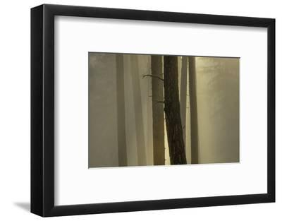 Blue Mountains, New South Wales, Australia-Art Wolfe-Framed Photographic Print