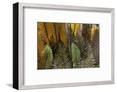 Hawaii-Art Wolfe-Framed Photographic Print