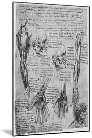 'Studies of the Muscles of the Face and Arm', c1480 (1945)-Leonardo da Vinci-Mounted Giclee Print