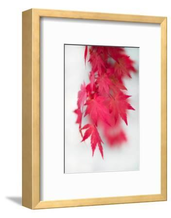 Red Movement-Philippe Sainte-Laudy-Framed Photographic Print