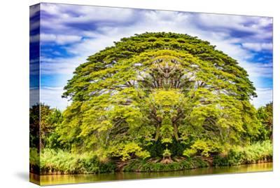 The Majestic Tree-Philippe Sainte-Laudy-Stretched Canvas Print