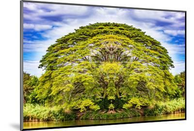 The Majestic Tree-Philippe Sainte-Laudy-Mounted Photographic Print