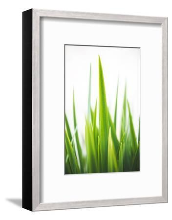 Blades of Green No. 1-Sonja Quintero-Framed Photographic Print