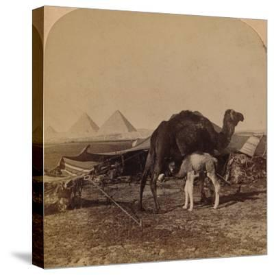 'A Baby of the Desert, Egypt', 1896-Unknown-Stretched Canvas Print
