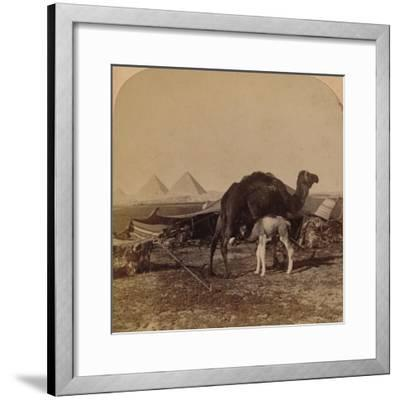 'A Baby of the Desert, Egypt', 1896-Unknown-Framed Photographic Print