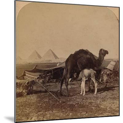 'A Baby of the Desert, Egypt', 1896-Unknown-Mounted Photographic Print