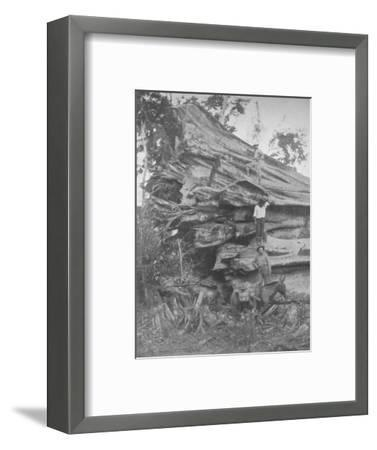 'A big bit of Brazilian Timber', 1914-Unknown-Framed Photographic Print