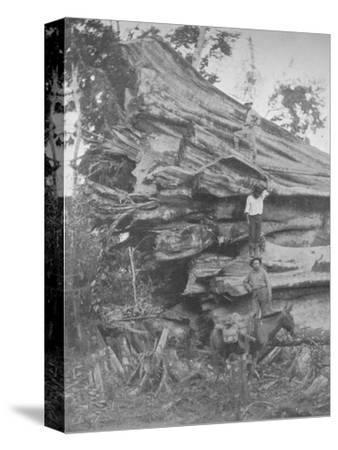 'A big bit of Brazilian Timber', 1914-Unknown-Stretched Canvas Print