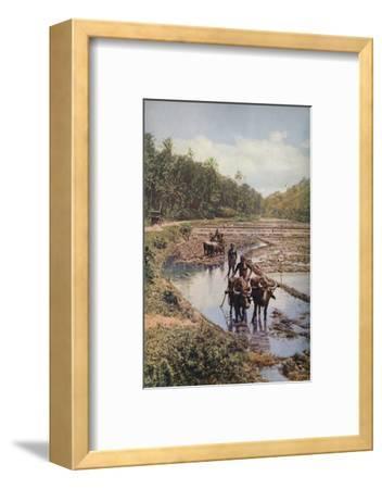 'Ceylon ...', c1920-Underwood-Framed Photographic Print
