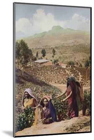 'Ceylon ...', c1920-Underwood-Mounted Photographic Print