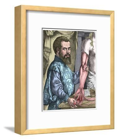 Andreas Vesalius, 16th century Flemish anatomist-Unknown-Framed Giclee Print