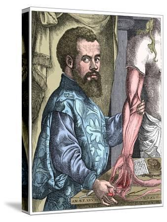 Andreas Vesalius, 16th century Flemish anatomist-Unknown-Stretched Canvas Print