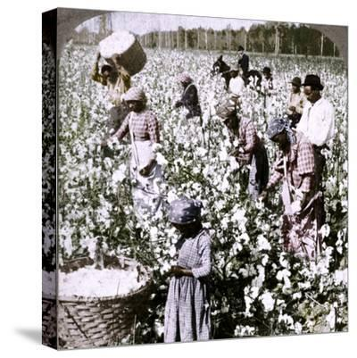 'Cotton is king - plantation scene with pickers at work. Georgia', c1900-Unknown-Stretched Canvas Print