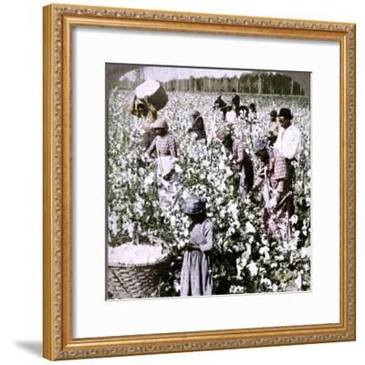 'Cotton is king - plantation scene with pickers at work. Georgia', c1900-Unknown-Framed Photographic Print