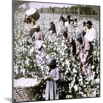 'Cotton is king - plantation scene with pickers at work. Georgia', c1900-Unknown-Mounted Photographic Print