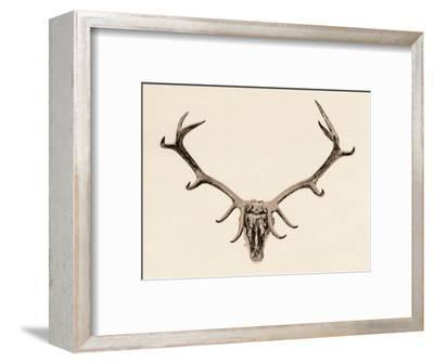 'Head of a Deer', c16th century, (1904)-Unknown-Framed Giclee Print