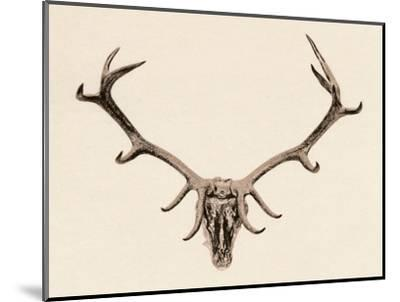 'Head of a Deer', c16th century, (1904)-Unknown-Mounted Giclee Print