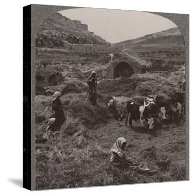 'Threshing grain near Jacob's Well', c1900-Unknown-Stretched Canvas Print