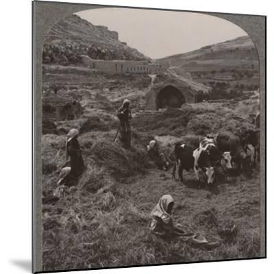 'Threshing grain near Jacob's Well', c1900-Unknown-Mounted Photographic Print