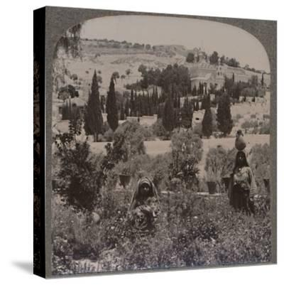 'Garden of Gethsemane and Mount of Olives from Greek Gardens', c1900-Unknown-Stretched Canvas Print