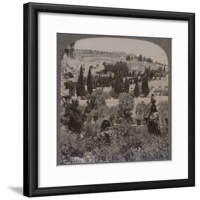 'Garden of Gethsemane and Mount of Olives from Greek Gardens', c1900-Unknown-Framed Photographic Print