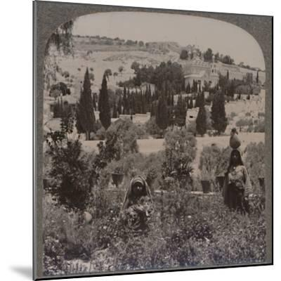 'Garden of Gethsemane and Mount of Olives from Greek Gardens', c1900-Unknown-Mounted Photographic Print