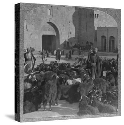 'Buying goats at the Damascus Gate, Jerusalem', c1900-Unknown-Stretched Canvas Print