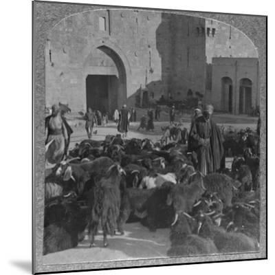 'Buying goats at the Damascus Gate, Jerusalem', c1900-Unknown-Mounted Photographic Print