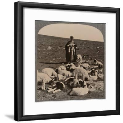 'Shepherd and flock', c1900-Unknown-Framed Photographic Print