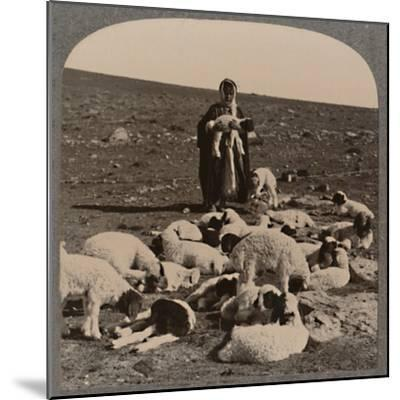'Shepherd and flock', c1900-Unknown-Mounted Photographic Print