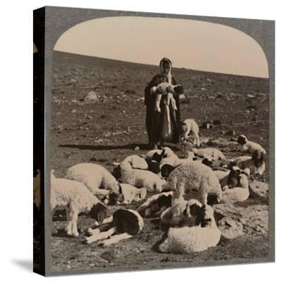'Shepherd and flock', c1900-Unknown-Stretched Canvas Print