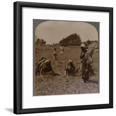 'Ruth gleaning in the Fields of Boaz', c1900-Unknown-Framed Photographic Print